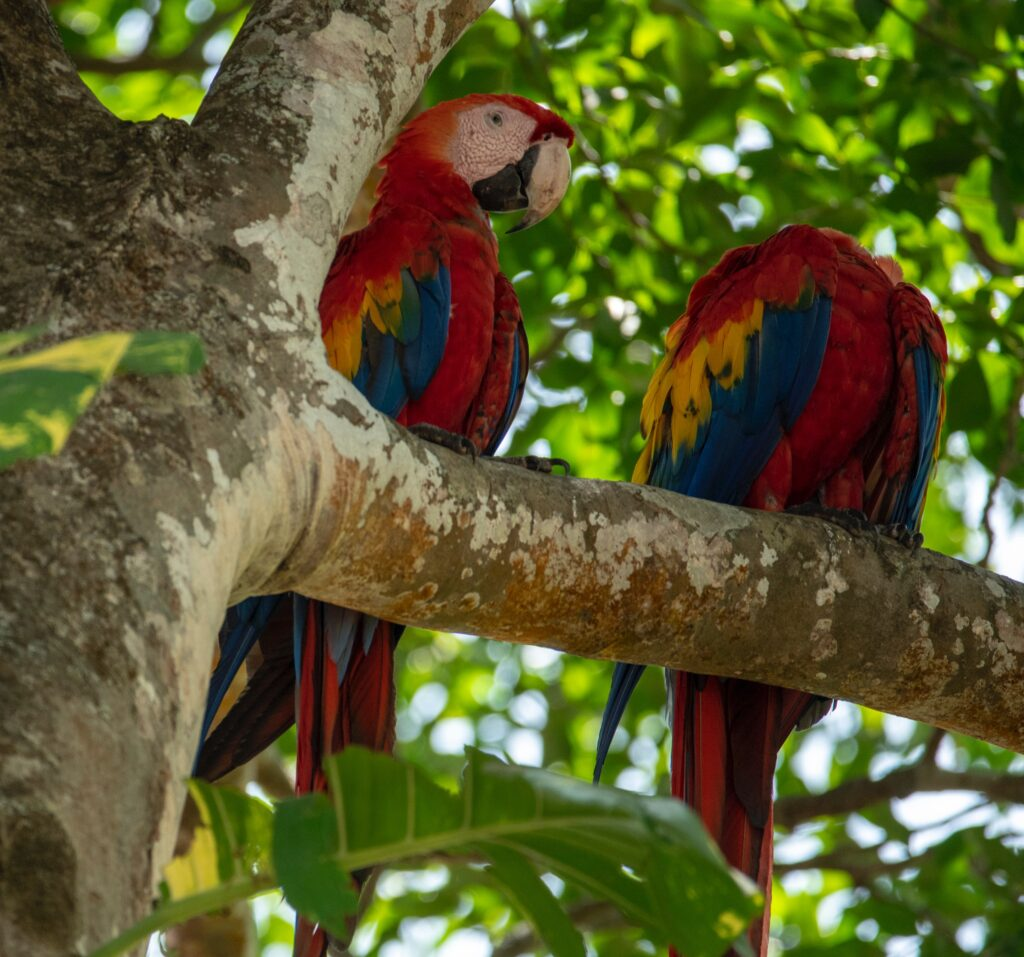 Costa Rica Guide For Tourists