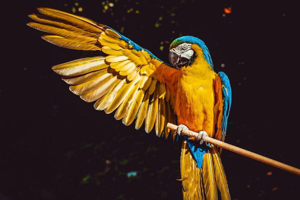 Cornell Lab of Ornithology