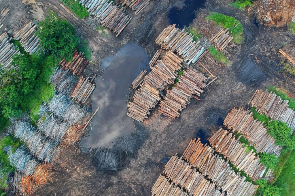 Forks Lumber Mill Tour